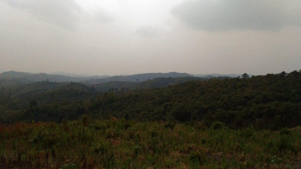 〈どこか懐かしさを感じる村周辺の山林の風景〉